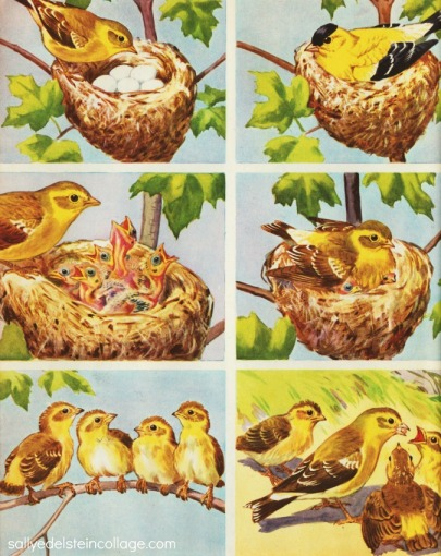 vintage illustration nature bird feeding its young