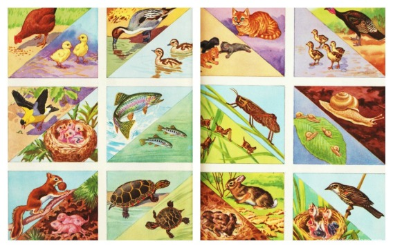vintage illustrations of nature mother animals and young
