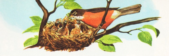 vintage childrens illustration baby bird feeding young 1950s