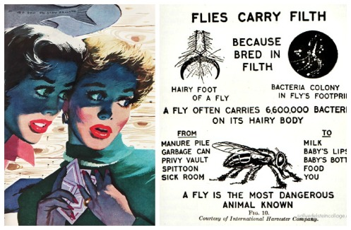 Vintage illustration woman 1950sand diagram of flies