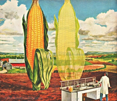 vintage illustration ad corn