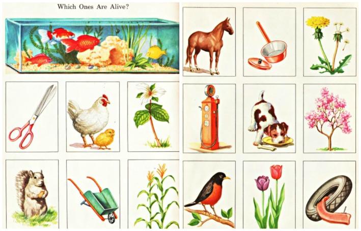 vintage illustrations schoolbook mother nature