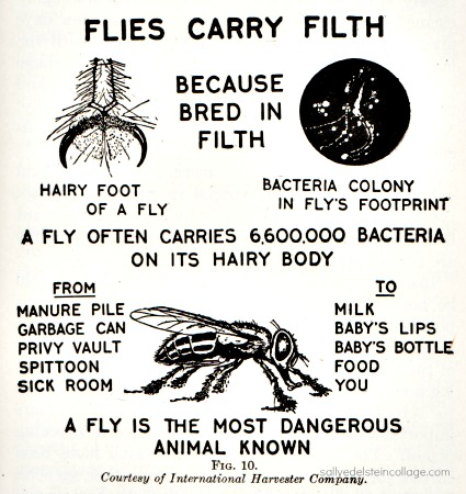 vintage warning dangers of flies as transmittors of disease