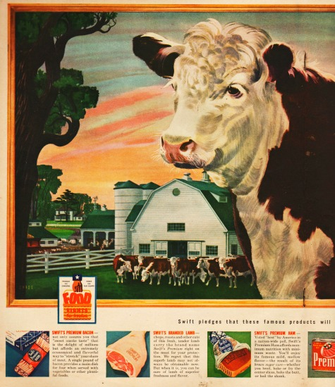 vintage illustration cattle at farm