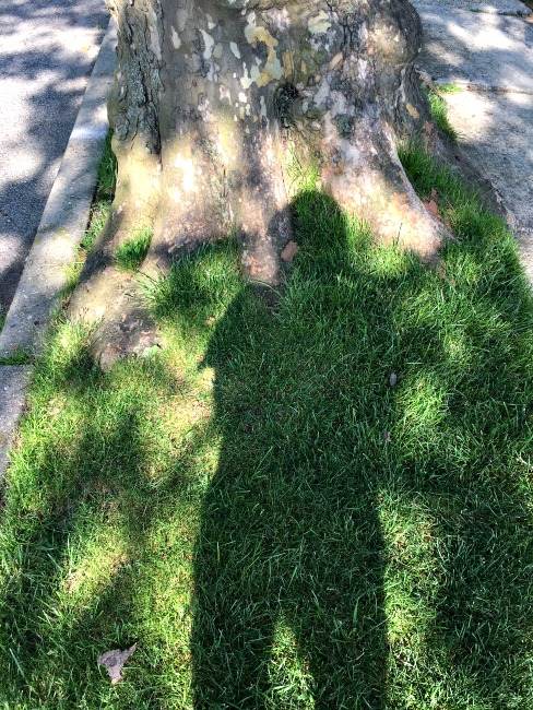 personal photo Sally Edelstein Shadow on tree