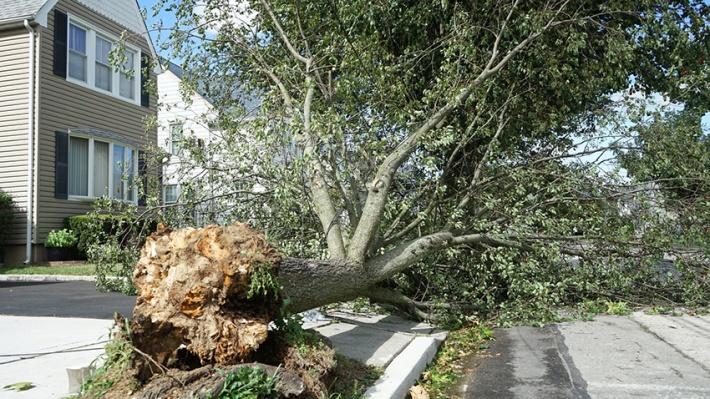 tree fallen during storm