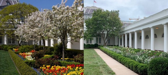 White House Rose Garden Before after