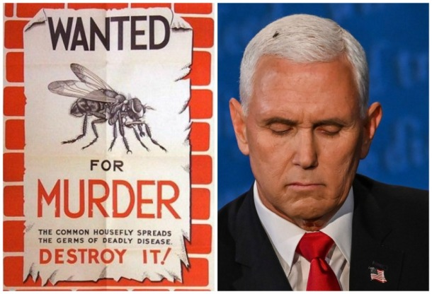 Mike Pence and Anti Fly poster